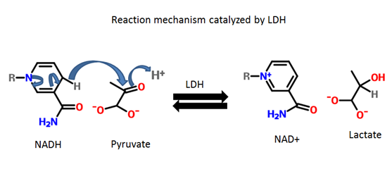 LDH_Reaction_2