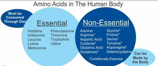 List-of-Amino-Acids